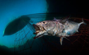 Le foto vincitrici del concorso fotografico Underwater Photographer of the Year 2020