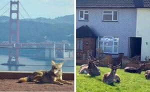 Gli animali si riprendono gli spazi delle città in quarantena (nuove foto)