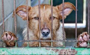 Niente più carne di cani e gatti, Shenzhen la prima città cinese a vietarne il consumo