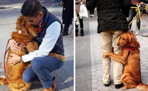 Louboutina, il golden retriever che abbraccia tutte le persone che incontra