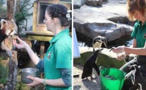 Guardiani di uno zoo si autoisolano con gli animali per prendersi cura di loro