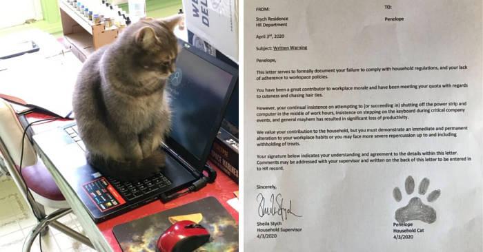 Uomo al lavoro da casa scrive un reclamo formale contro il suo gatto, e ne ha tutte le ragioni