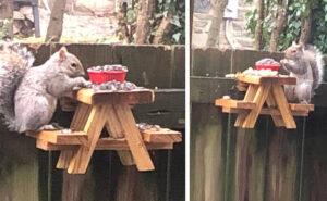 C'è chi costruisce tavoli da picnic per scoiattoli durante la quarantena e sono adorabili