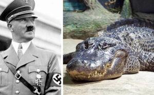 """È morto l'alligatore Saturno, """"animale domestico"""" di Hitler e """"prigioniero di guerra"""" russo"""