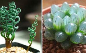 30 tipi di piante grasse che forse non avete mai visto