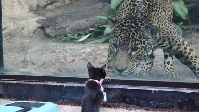 Gattini senza casa vengono portati in gita allo zoo e incontrano i loro parenti lontani