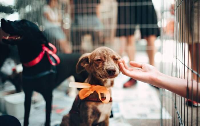 Vietata la vendita di cani, gatti e conigli nei negozi di animali, la nuova legge di New York