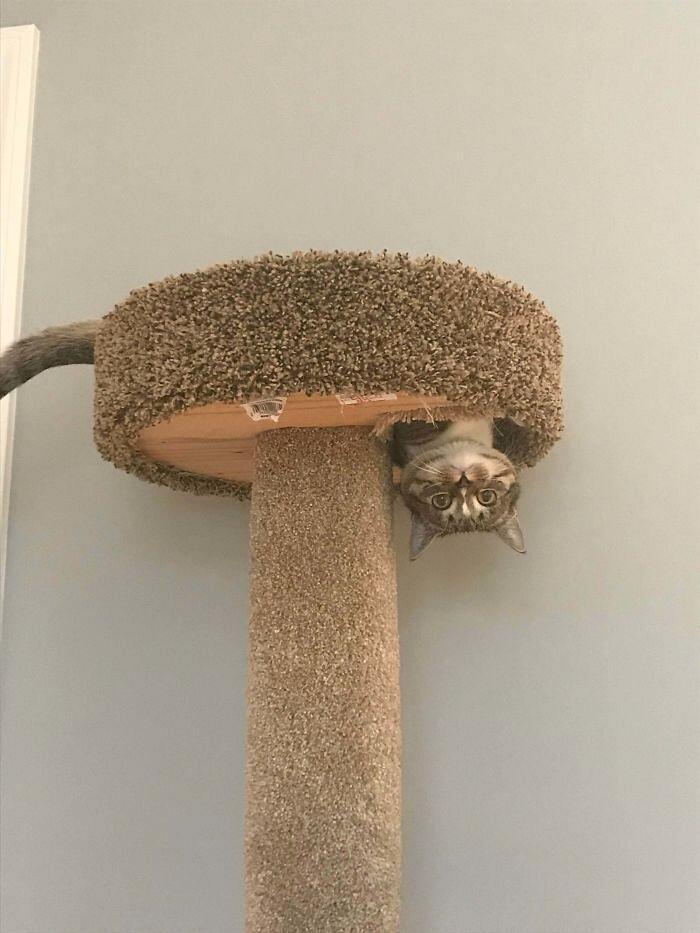 46 foto divertenti di gatti che sfidano le leggi della fisica