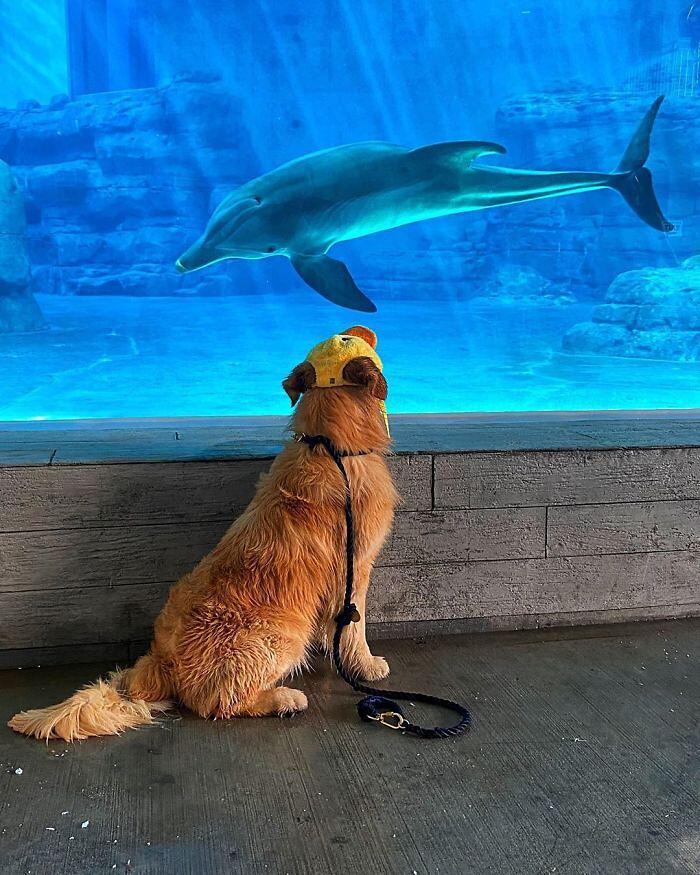 Un delfino e un cane si conoscono online, poi si incontrano e diventano amici