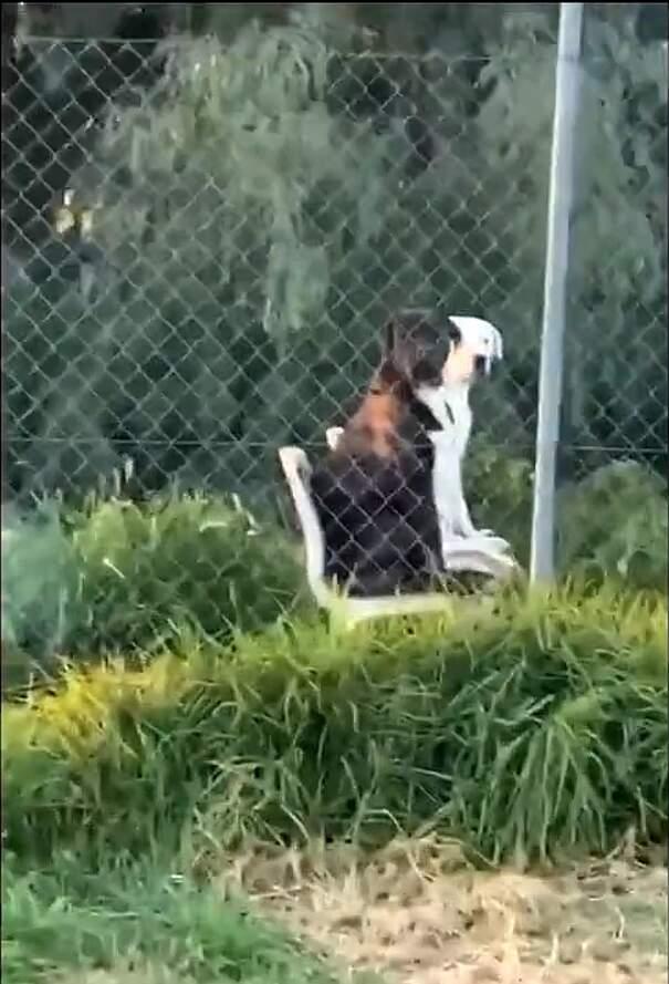 Passante vede due cani seduti come persone sulle sedie del giardino e il video è bizzarro