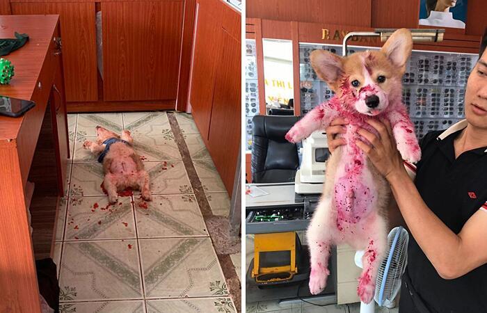 Foto di animali che hanno terrorizzato i loro proprietari