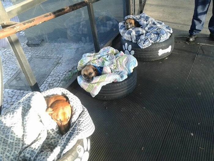 Stazione degli autobus apre le porte ai cani randagi in modo che abbiano un posto caldo dove dormire