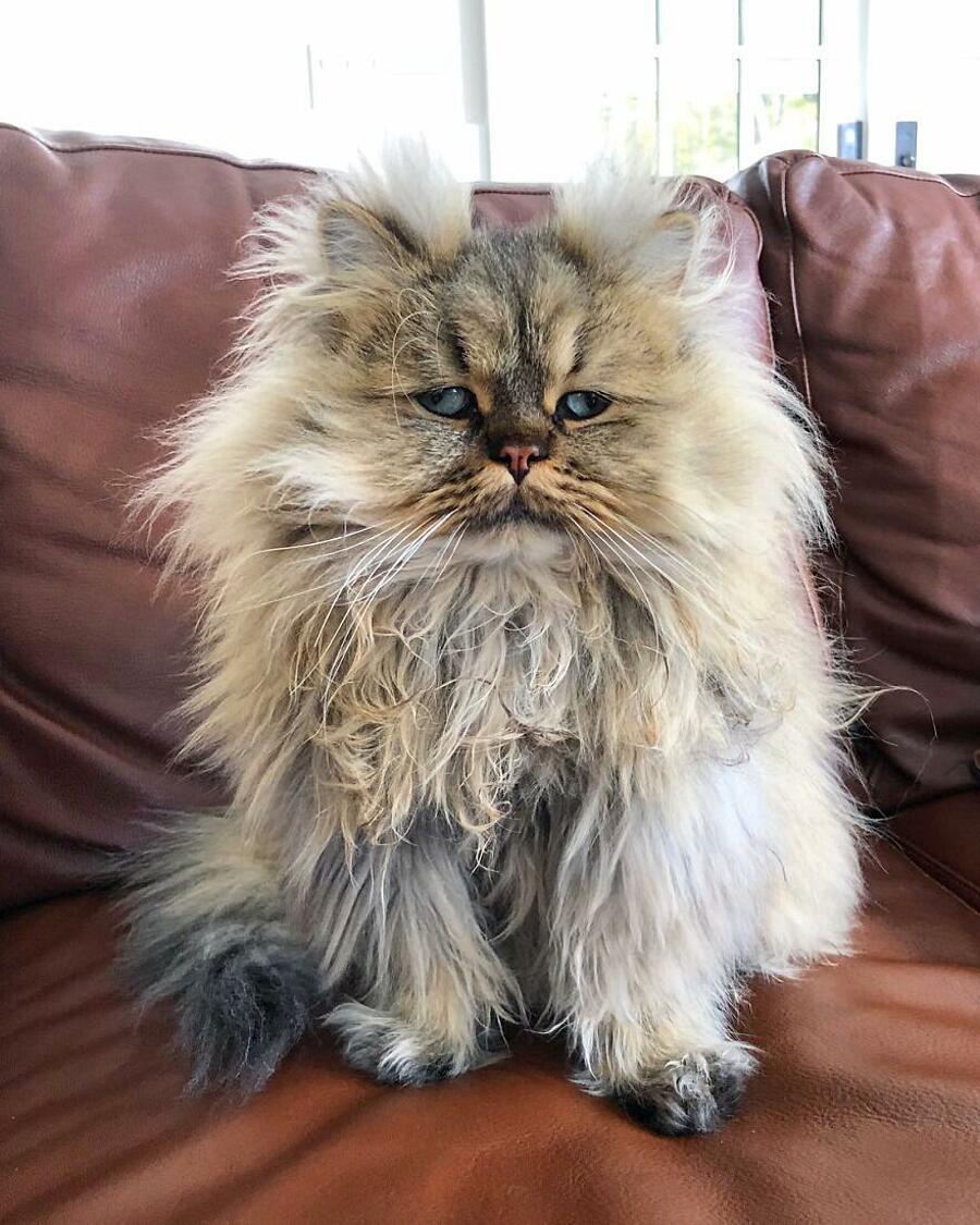 Barnaby, il gatto che ha sempre l'aspetto di uno che ha passato la notte in bianco (51 foto)