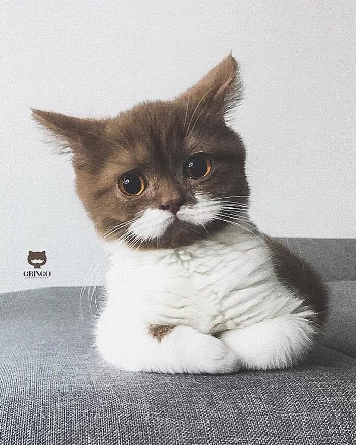 Vi presentiamo Gringo, il gatto con i baffi bianchi