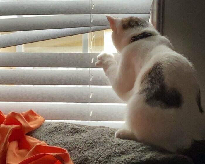 Quando il vicino ficcanaso ha 4 zampe: 30 foto di cani e gatti amanti del pettegolezzo