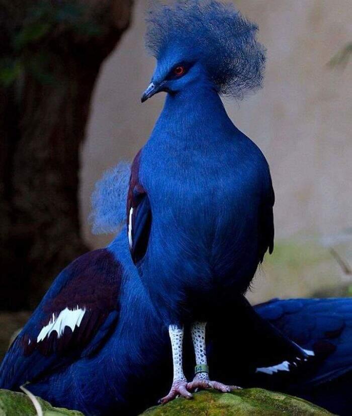 34 specie di piccioni che forse non avete mai visto