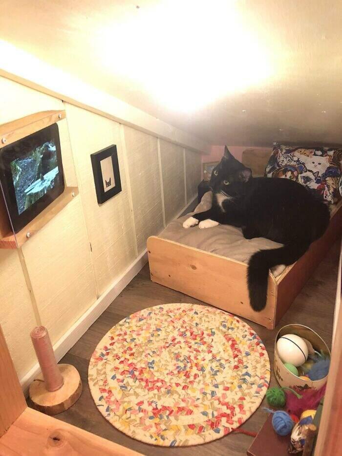 Uomo trasforma l'intercapedine di casa in una camera da letto per il gatto