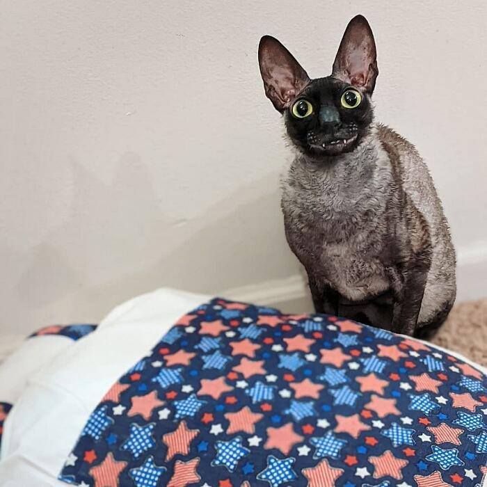 Pixel, il gatto adorabile dal sorriso contagioso